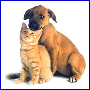 image of a puppy and kitten